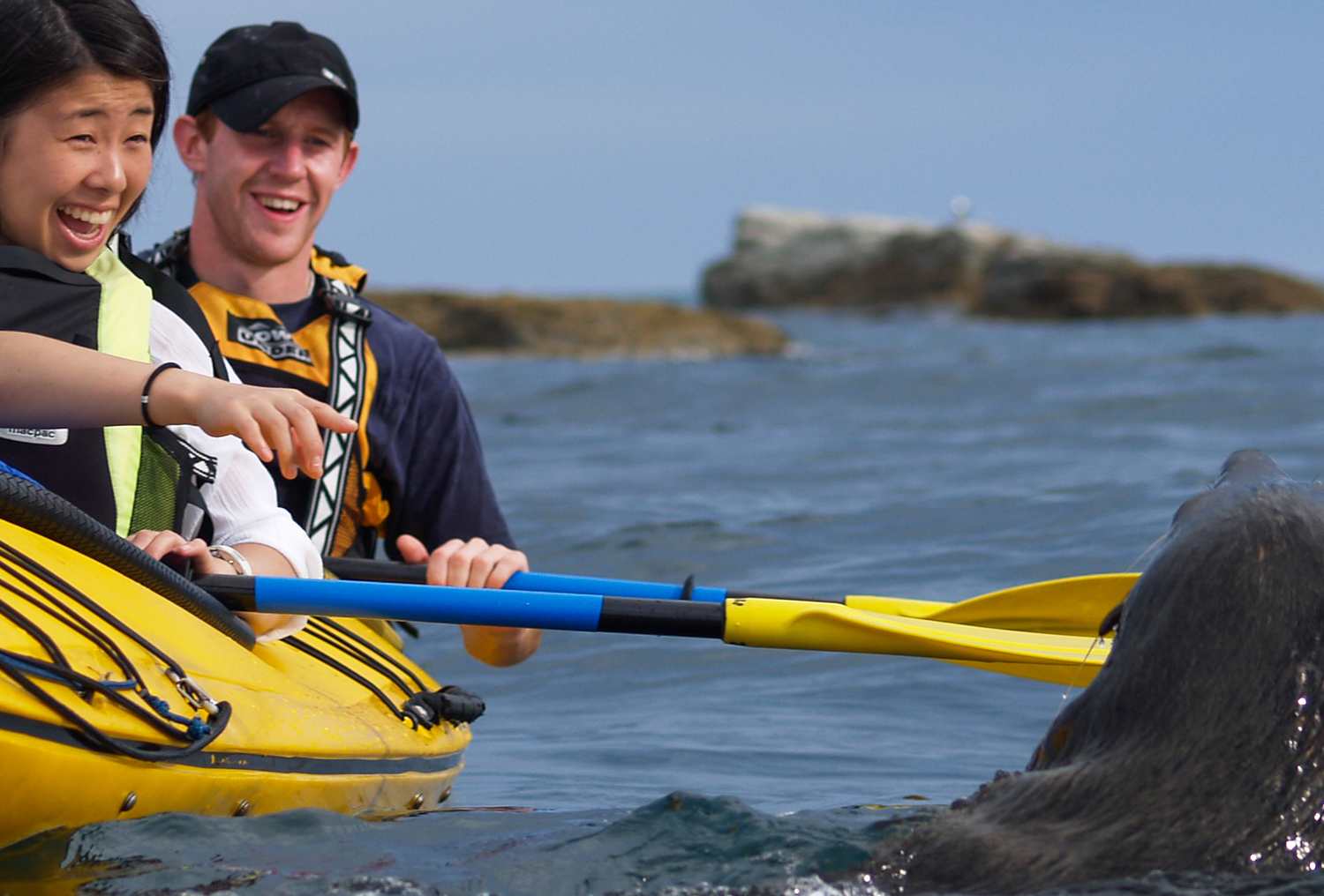 Seal with Kaikoura Kayaks