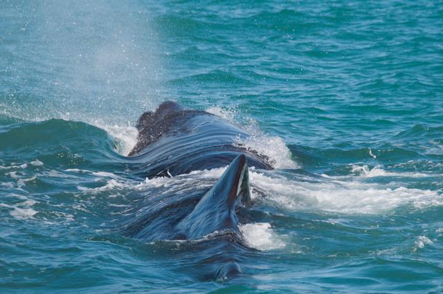 Whale Watch Kaikoura-5