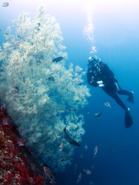 Black Coral Milford