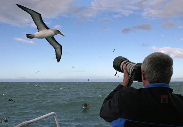 Photographer with Albatross