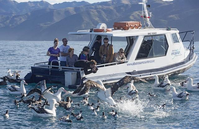 Birds with Albatross Encounter boat