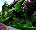 Botanic - Treehouse reduced