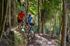 Twin Coast cycle trail through bush