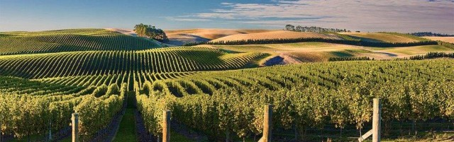 View over Awatere Vineyard Hillsfield, Marlborough