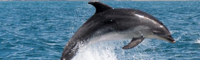 Dolphin youtube