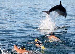Explore Group - Bay of Islands dolphin swim 2