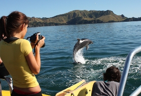 Girl taking picture of Dolphins in the Bay of Islands