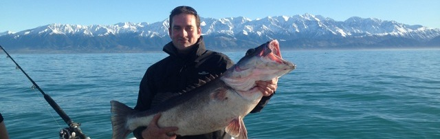 Kaikoura fishing charters catching Groper