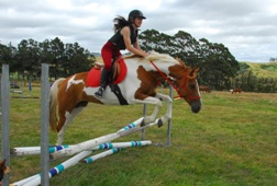 Kates Horse Riding Centre kerikeri -Horse on jumps