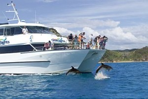 Dolphin jumping in front of bow on cruise boat bay of islands