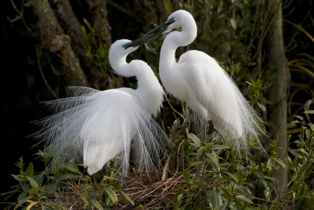 White Heron Sanctuary Tours Whataroa