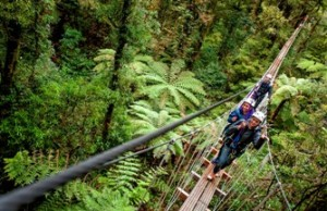 Rotorua Canopy tours on swing bridge
