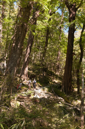 Routeburn-Track-en-route-to-Routeburn-Falls-Hut-5