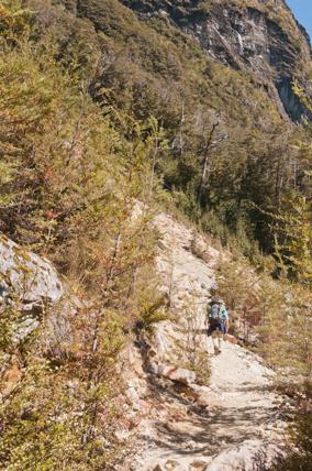 Routeburn-Track-en-route-to-Routeburn-Falls-Hut-7