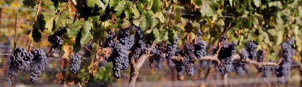 Bay-of-Islands-sightseeing-tours-Kerikeri-wine-tour
