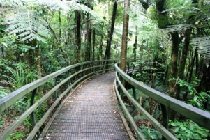 Bay-of-Islands-sightseeing-tours-Manginagina-walkway-pukeiti-forest-walks