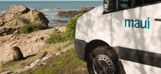 Road-trip-New Zealand-christchurch to Kaikoura-seal-colony-Maui-Campervan-2