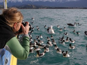 Albatross-encounters-kaikoura-bird-watching-albatross (2)