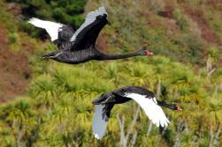 Huka-falls-cruise-bird-watching-waikato-river