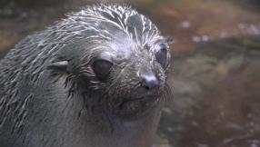 Ohau-stream-kaikoura-baby-seals (1)