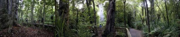 Tane-Mahuta-Kauri-Tree-Footprints-Waipoua-Forest-1