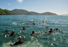 e-ko-picton-cruises-marlborough-sounds-dolphin-swim-viewing-tours-2