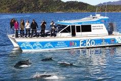 e-ko-picton-cruises-marlborough-sounds-dolphin-swim-viewing-tours