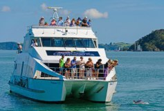 fullers-cream-trip-bay-of-islands-bottlenose-dolphin-viewing