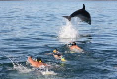 fullers-cream-trip-bay-of-islands-swimming-with-bottlenose-dolphins