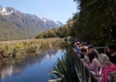 kiwi-discovery-queenstown-to-milford-sound-mirror-lakes-photo-stop