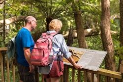 waitangi-treaty-grounds-bush-walks-history