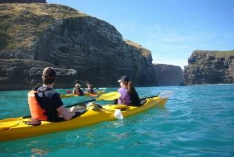 akaroa-pohatua-penguins-guided-kayak-wildlife-tours