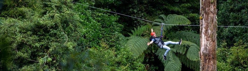 Rotorua Zipline Canopy Adventure Eco Forest Tours