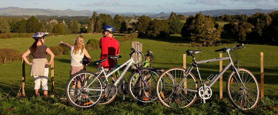 twin-coast-cycle-trail-bike-hire-top-trail-2
