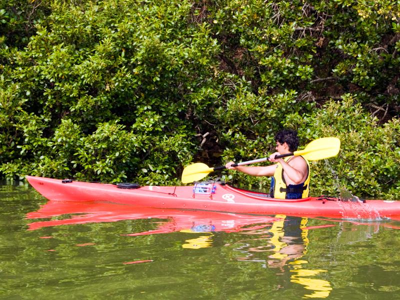 Coastal Kayakers Paihia Bay Of Islands Guided Kayak Tours