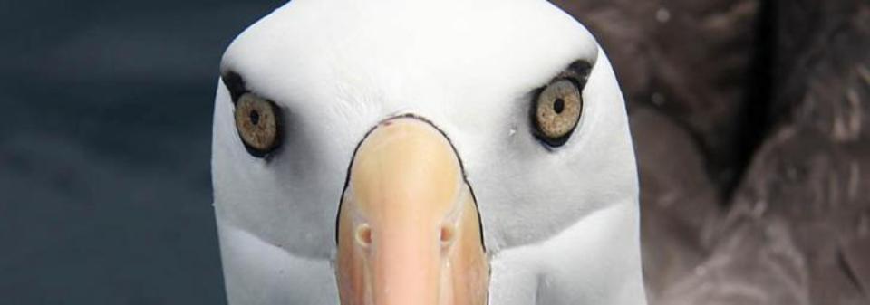 albatross-encounters-kaikoura-bird-watching-tours-3