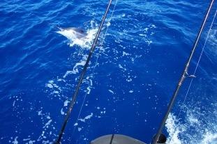 grand-cru-fishing-charters-bay-of-islands-marlin-game-fishing-trips