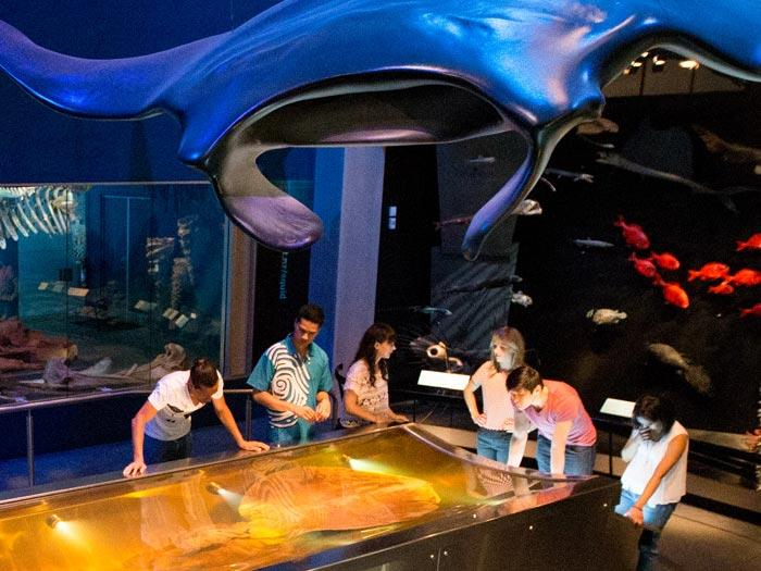 te-papa-museum-wellington-must-see-attraction-9