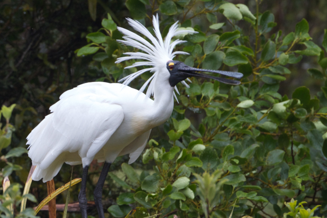 white-heron-guided-sanctuary tours-gallery-4