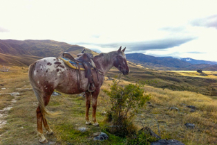 Backcountry-saddles-horse-trekking-in-the-cardrona-valley-menu-2