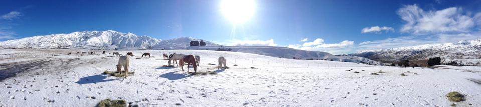 Backcountry-saddles-horse-trekking-in-the-cardrona-valley-panorama-1