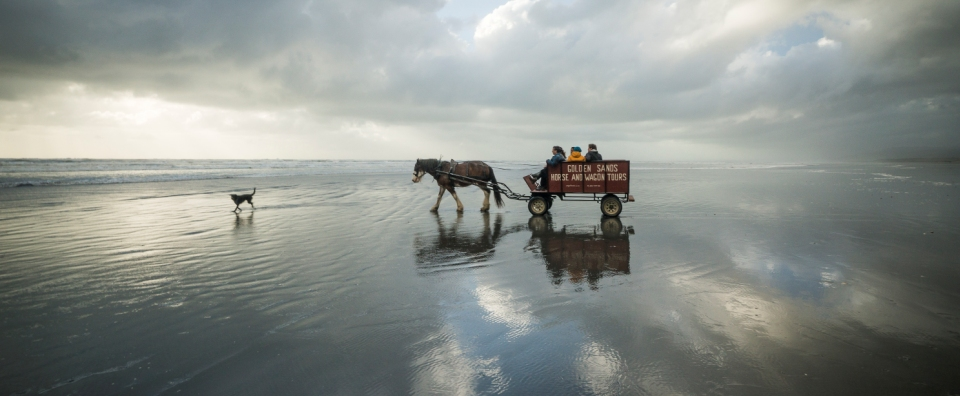 Golden Sands Horse and Wagon Tours on the barrytown beach in the water-2