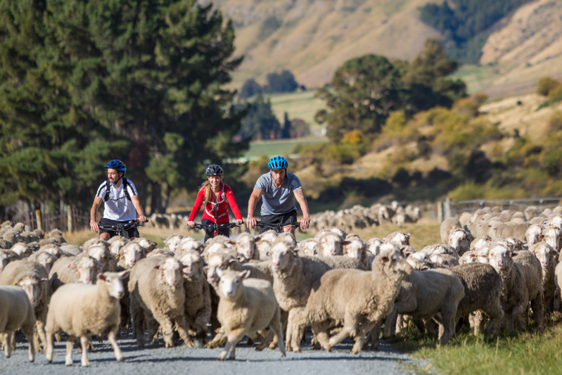 Queenstown Cruises, Farm Experience & Cycle Trail