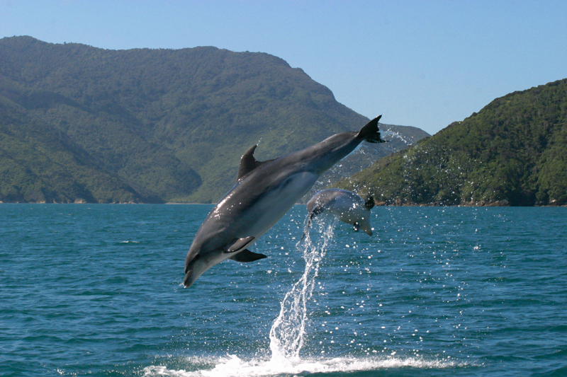 Dolphin Watch Nature Tours