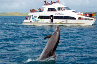 dolphin jumping alongside Bay of Islands Fullers Cruise Boat